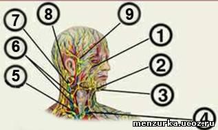 массаж лица лимфоузлы